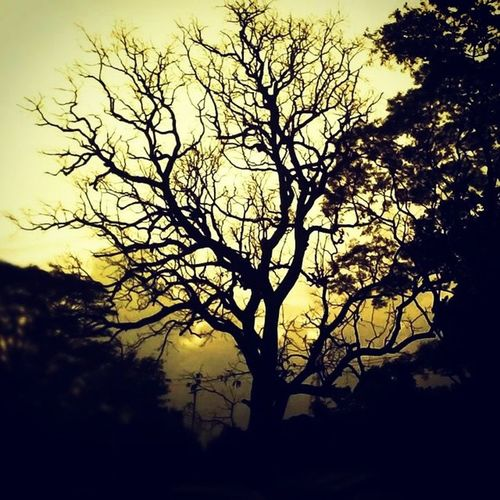 Hauntedtree Sunsetghosts