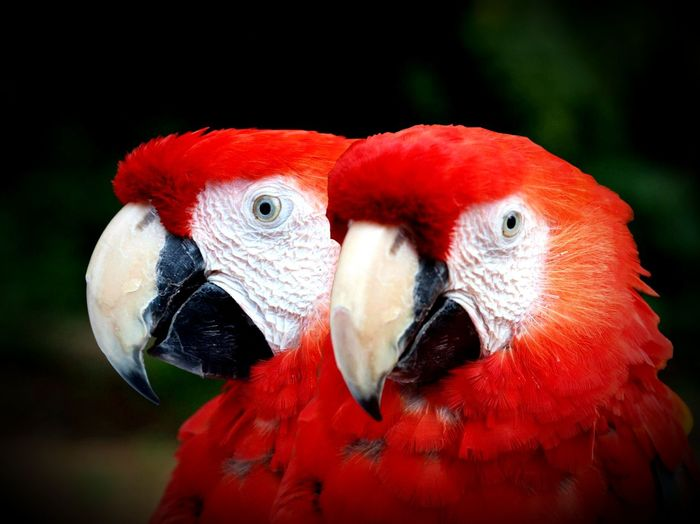 Parrots Parrots