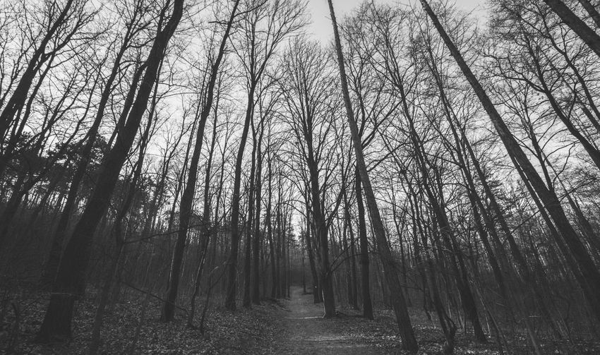 Balck And White Blackandwhite Bw Bw_collection Forest High Angle View Tree Trees