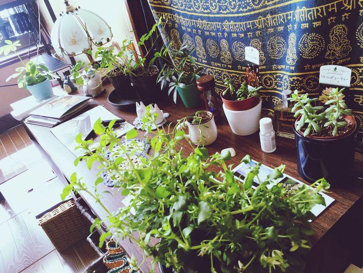 Green Room Plant