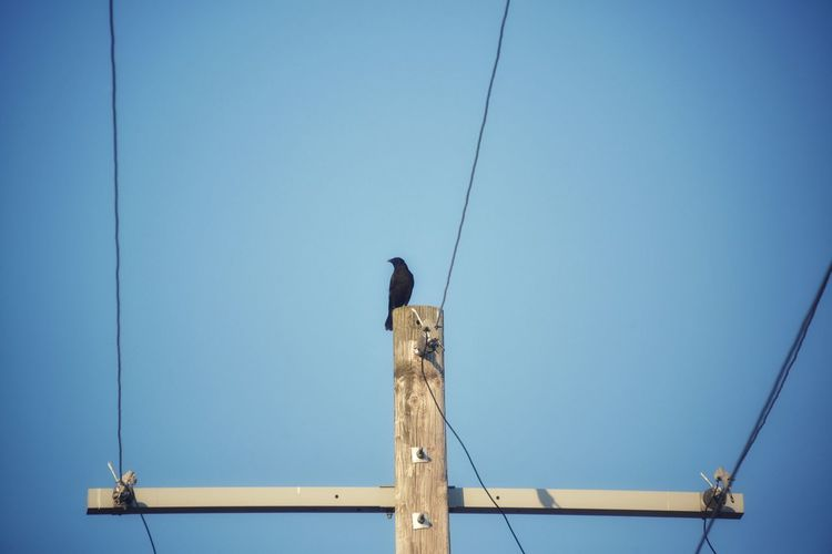 Low angle view of bird perching on wooden post against clear sky