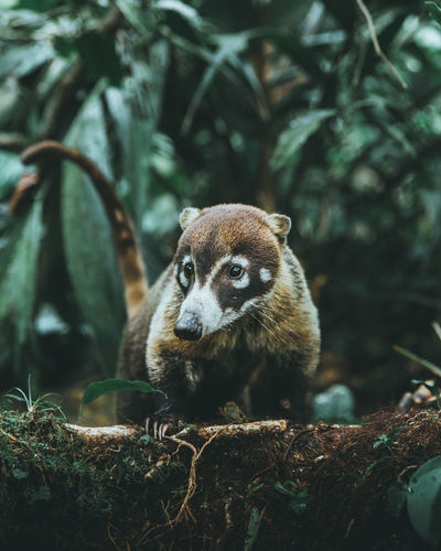 Mammal On Tree In Forest
