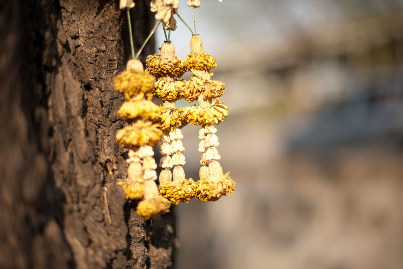 Day Dry Out Flower Flower Garland Focus On Foreground Fragility No People Outdoors Wilted Flower Yellow