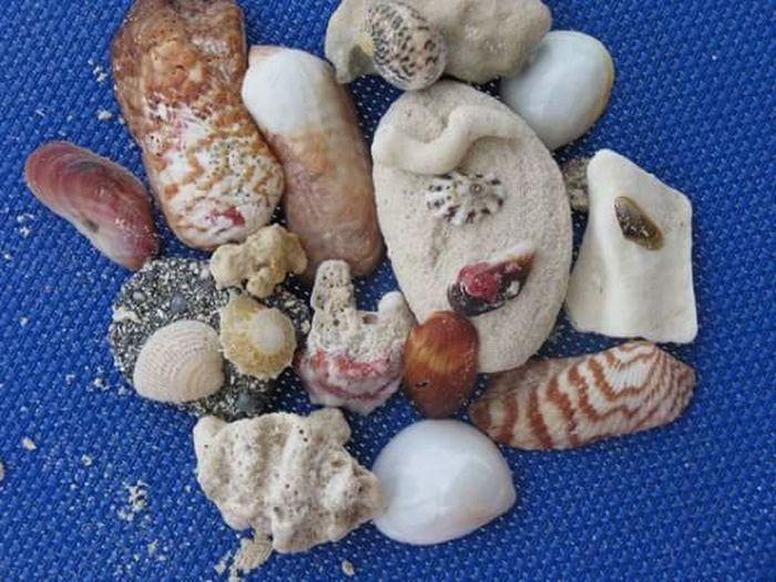 Treasures from the sea! Treasures From The Sea Cayo Santa Maria Shells🐚 Beach