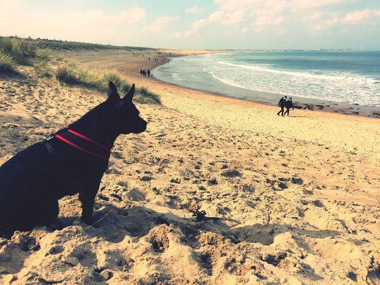 Blyth Beach Seaton Sluce Daily Life Dog Walking Sunny Day Beach Beach Photography Seaside Eye4photography  Great Day Out Seaside_collection Sand Dune Blue Sea Waves, Ocean, Nature Cresent