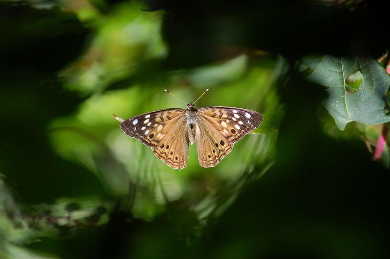 Butterfly Seen