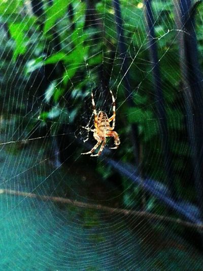 Check This Out Spider Spider Web Cool Little Guy!