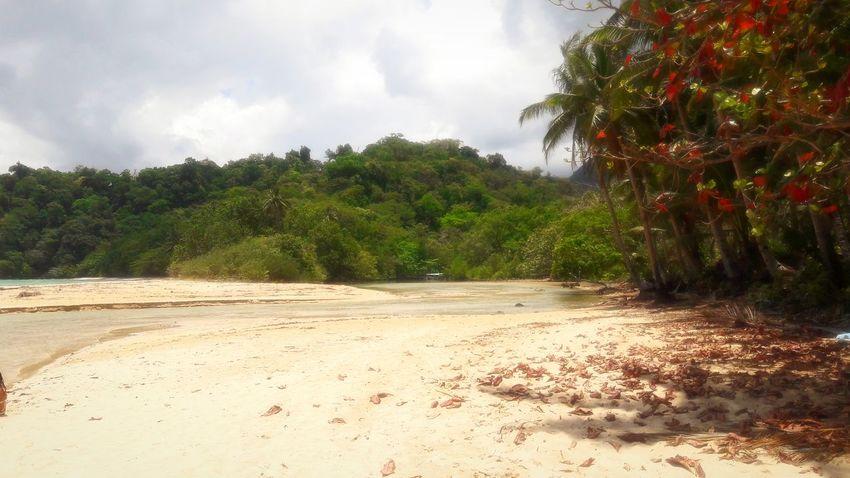 Tree Palm Tree Beach Sand Sky Cloud - Sky Shore Sandy Beach Tropical Tree Scenics
