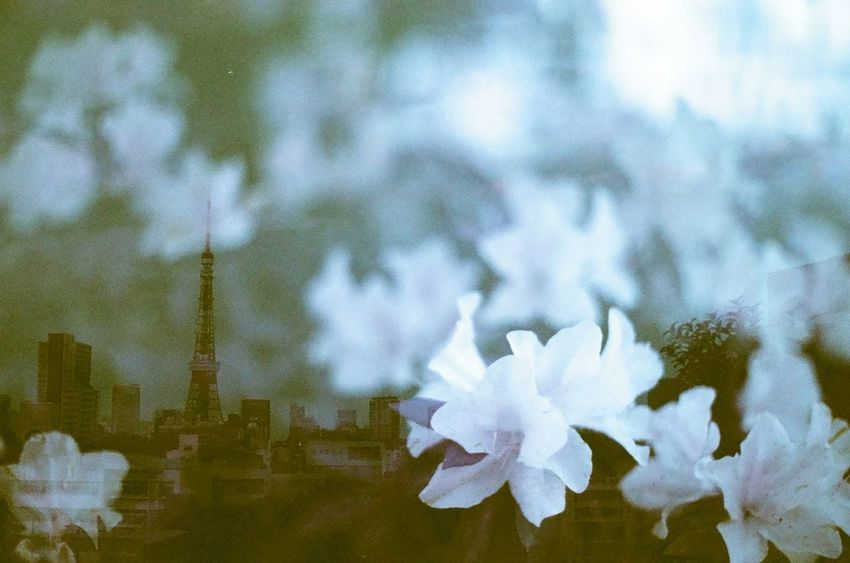 Travel Tokyo Tower Hana Multiple Exposures Double Exposure Film Filmcamera 135mm NikonFM2 Purple Pmg_tok