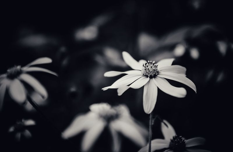 Flowers Blackandwhite Nature Closeup Details Beauty In Nature EyeEm Nature Lover Relaxing Non-urban Scene No People Tranquil Scene Monochrome Flowers Petals