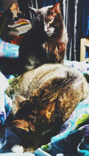 Vscocam I Love My Cats  Cats Animal Photography My Cats VSCO I Love My Pets EyeEm Cats Kitties Catoftheday