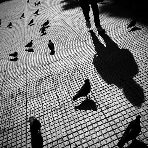 Animal Wildlife Animals In The Wild Bird City Day Focus On Shadow Group Of Animals Group Of People High Angle View Leisure Activity Lifestyles Outdoors People Real People Shadow Street Sunlight Vertebrate Walking Women