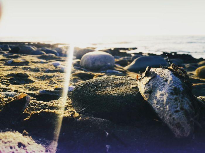 Sand Ocean Shells🐚 Sunset Naturallensflare