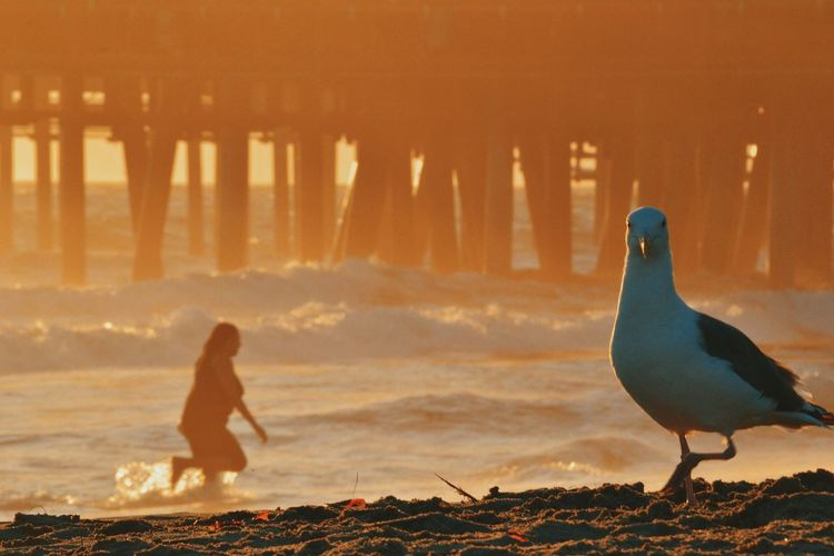 Seagull Perching On Beach Against Woman Enjoying In Sea During Sunset