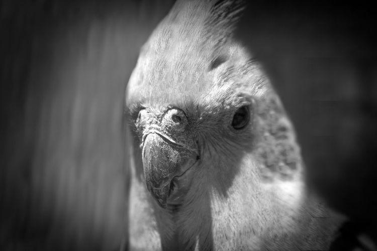 Close-up of parakeet