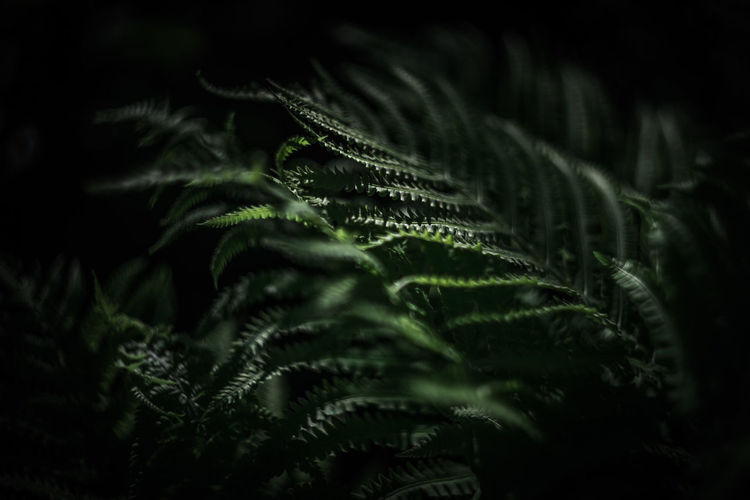 Close-up of ferns