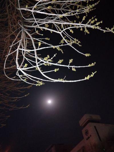 Illuminated Tree Black Background Close-up