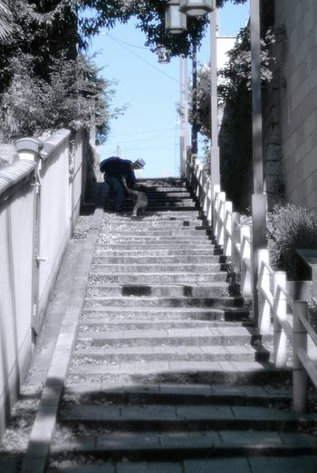 Japan Photography 口縄坂 坂 Slope Stairs Nikkor_s50mmF1.4 Light And Shadow Colorsplash