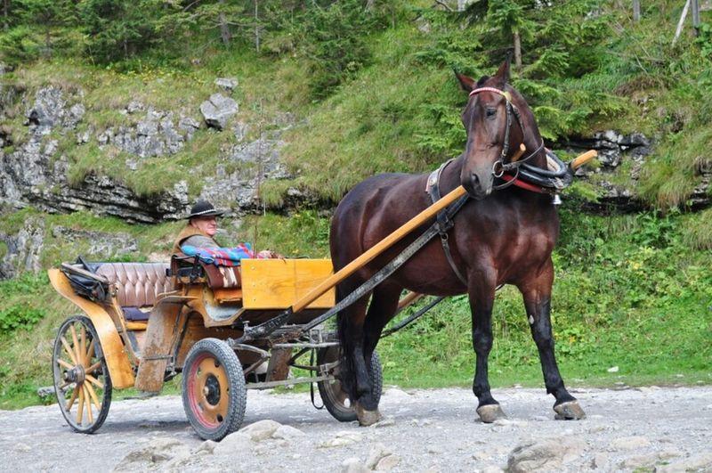 Tatry Mountain DolinaKościeliska Photo.Mariusz Woźniak