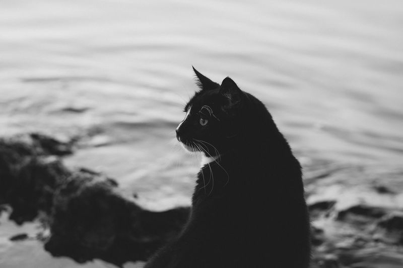 Monochromatic shot of a black cat by the lake