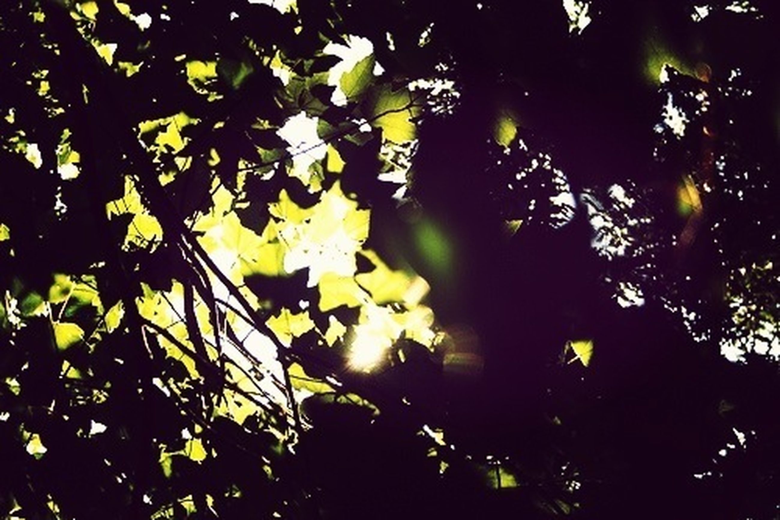 tree, low angle view, branch, growth, leaf, night, nature, silhouette, sunlight, illuminated, outdoors, tranquility, no people, beauty in nature, backgrounds, full frame, green color, lens flare, sky
