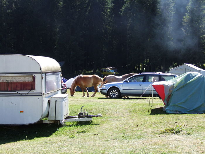 Horses By Motor Home At Forest