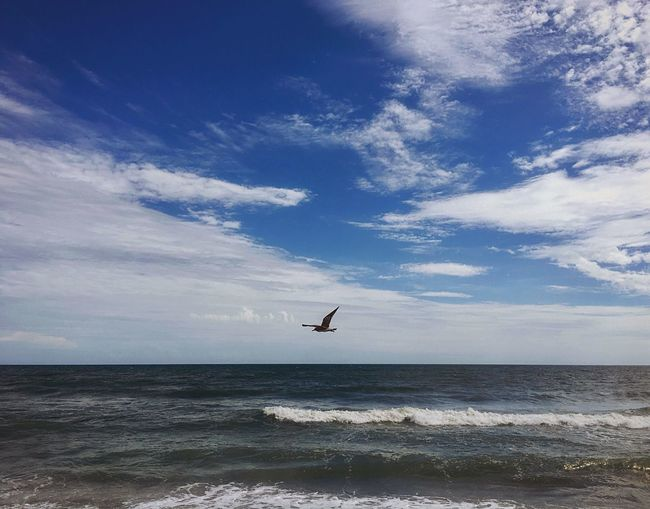 🌞 oant moarn 🌚 Sea Flying Seagull Horizon Over Water Sky Beauty In Nature Nature Ocean Water Cloud - Sky Scenics Day Tranquil Scene Tranquility Mid-air Motion Wave Taking Photos Textures And Surfaces Summer Azure Beach Freshness