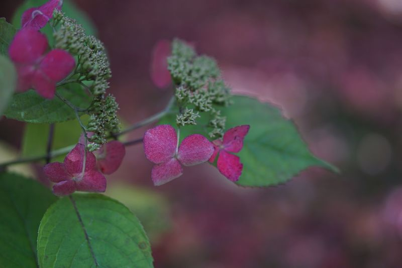 EyeEm Nature Lover Flowers Pink Color Nature Flower Leaf Beauty In Nature Plant Growth