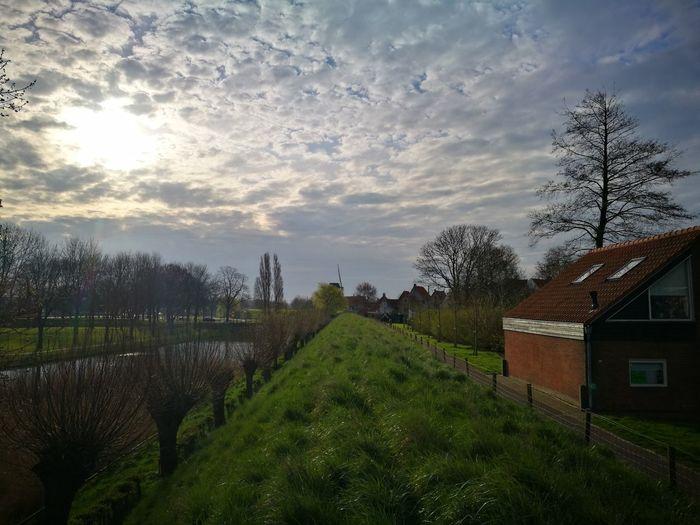 Panoramic shot of trees against sky