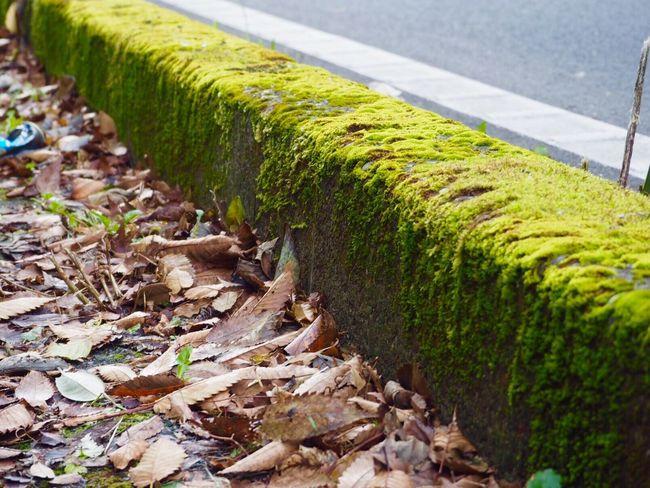 養老渓谷 Nature Green Color Leaf No People Day Close-up Outdoors