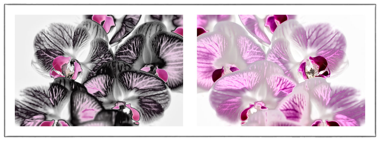 Diptych Flowers Diptychs Flower Flowers Orange Orchis Pairs Solarization Solarized Flowers