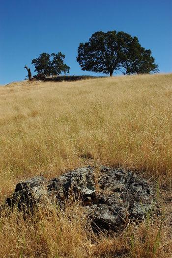 Beauty In Nature Blue Clear Sky Dry Grass Field Grass Grassy Hill Landscape Sky Sunolregionalwilderness Fremont California Feel The Journey