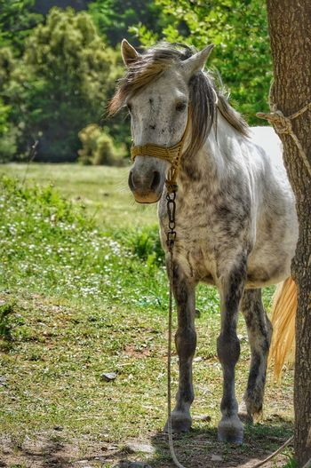 One Animal Horse Domestic Animals Mammal Animal Themes Grass Day Outdoors Green Color No People Livestock Standing Tree Nature The Week On EyeEm