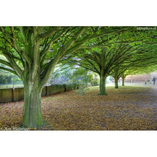 Rufford Squaready Ruffordpark Ruffordabbey Ruffordabbeycountrypark HDR Canon Canoneos450D Park Autumn Fall Leaves Lawn Photo365 Photooftheday Igers Instagrammers K8marieuk Tree Trees