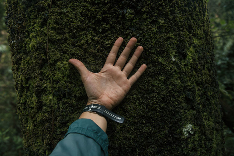 Adult Close-up Green Color Hand Human Body Part Human Hand Nature Nature One Person Outdoors Real People Tree Trunk