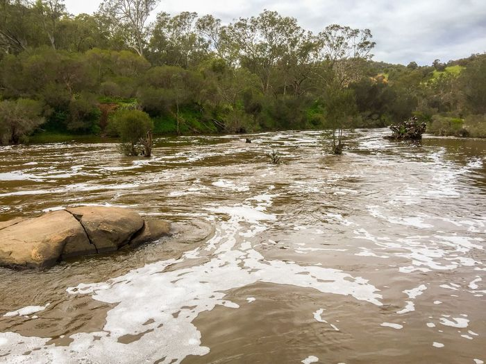 River Rapid: Downstream River Rapids Foamy Downstream Water Swan River Nature Tree Western Australia Riverbank Landscape Outdoors Australia Overcast Swan Valley  Lush Peaceful Trees Tranquil Scene