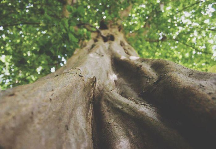 Nature_collection Sun Sonnenlicht Cubefotografie Sunlight Naturephotography Taking Photos Enjoying Life Forest Photography Forest Wood Green Wald Bäume Blätter Baum