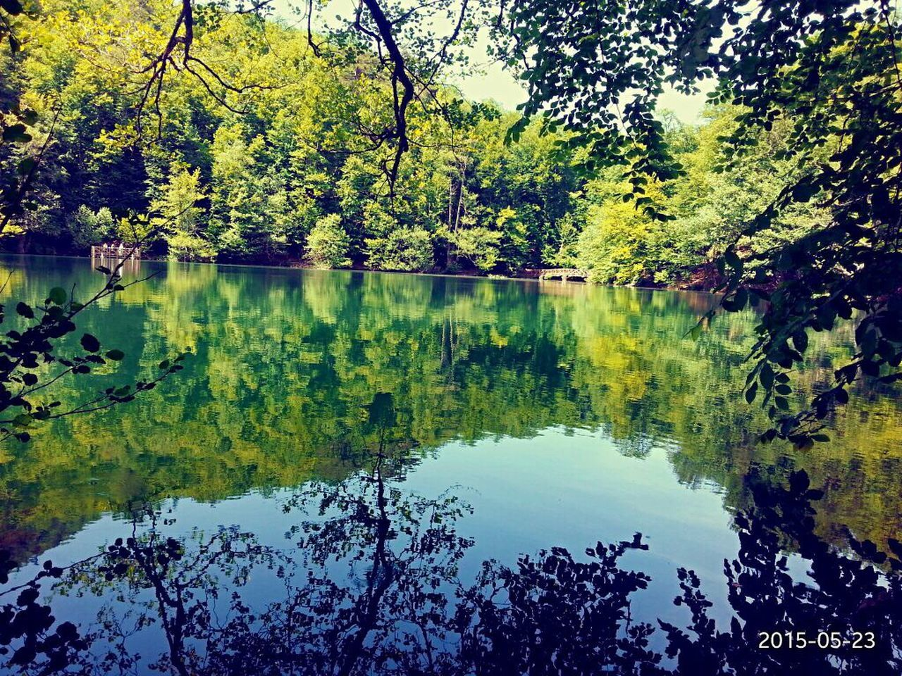 reflection, lake, water, tree, nature, beauty in nature, tranquility, standing water, tranquil scene, growth, no people, scenics, outdoors, day