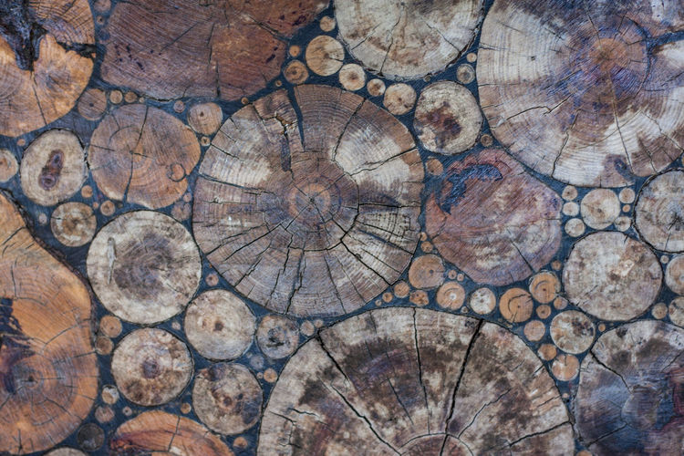 Backgrounds Bark Circle Close-up Concentric Cross Section Deforestation Firewood Forest Full Frame Geometric Shape Log Lumber Industry No People Pattern Shape Textured  Timber Tree Tree Ring Wood Wood - Material
