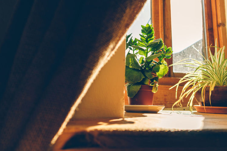 Potted plant on window sill at home