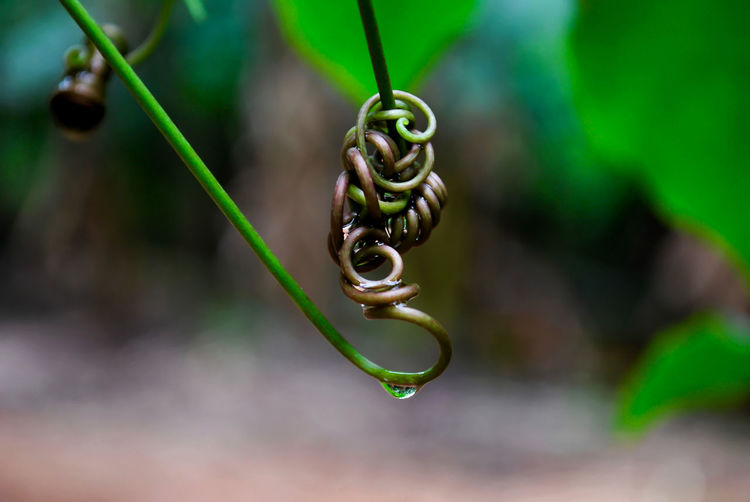Close-up of coiled plant against blurred background
