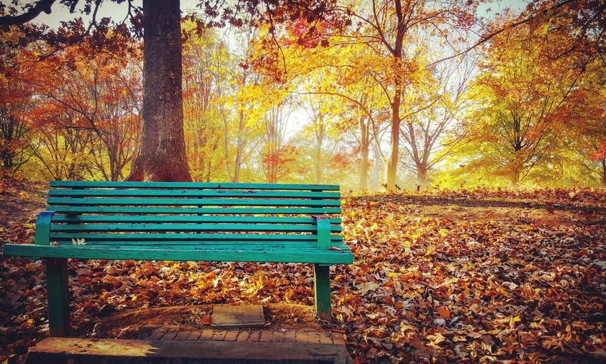 Fall is a Beautiful time of year. Autumn Autumn Colors Autumn Leaves Autumn Collection Fall Beauty Fall Leaves Fall Colors Eyem Best Shots Nature_collection Nature's Diversities 2016 EyeEm Awards ATL Atlanta Ga No People Nature Georgia Atlanta Grant Park