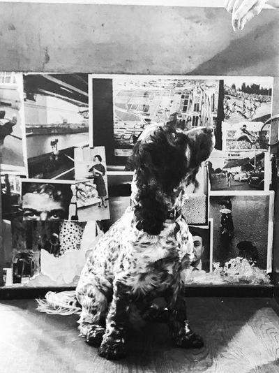 Dog looking at store