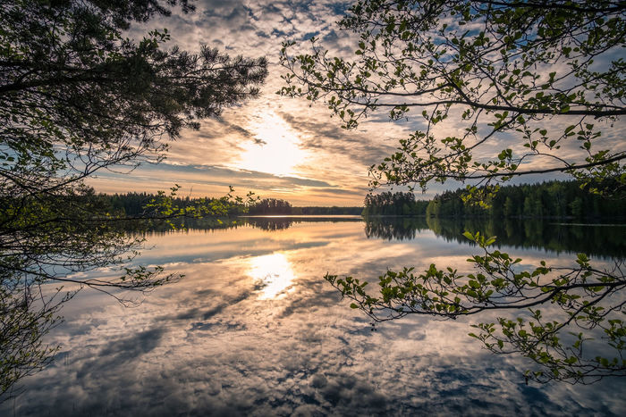 Scenic landscape with lake and sunrise at summer morning in national park Liesjärvi, Finland Atmospheric Mood Beauty In Nature BluieWestOne Branch Cloud - Sky Lake Landscape Lifestyles National Park Nature Outdoors Peaceful Reflection Scenics Sky Sumertime Sunlight Sunrise Sunset Tranquil Scene Tranquility Water Yellow