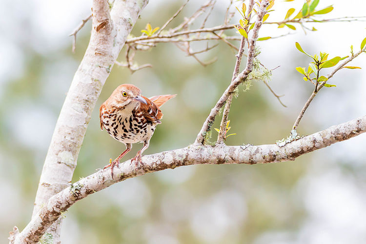 Animal Themes Bird Animal Wildlife Animal One Animal Vertebrate Tree Animals In The Wild Branch Perching Focus On Foreground Plant Nature Day No People Outdoors Beauty In Nature Close-up Bare Tree Growth