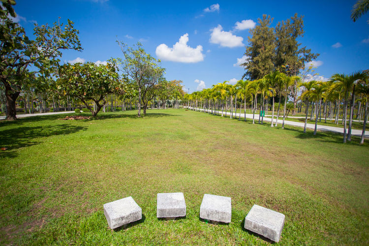 The sky is beautiful clouds At the public park of Thailand Plant Grass Tree Green Color Sky Nature Tranquility Cloud - Sky Tranquil Scene No People Day Land Field Beauty In Nature Growth Sunlight Park Scenics - Nature Sport Outdoors