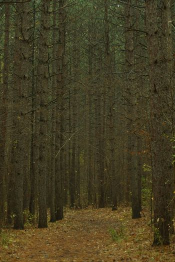 One Rainy Late Autumn Morning Tree Forest Plant Land Tranquility Growth Beauty In Nature Tranquil Scene No People Nature WoodLand Non-urban Scene Scenics - Nature Landscape