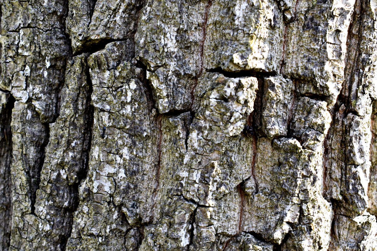 textured, tree trunk, tree, trunk, backgrounds, full frame, plant, rough, plant bark, close-up, no people, natural pattern, pattern, nature, day, growth, outdoors, wood - material, bark, textured effect, natural condition