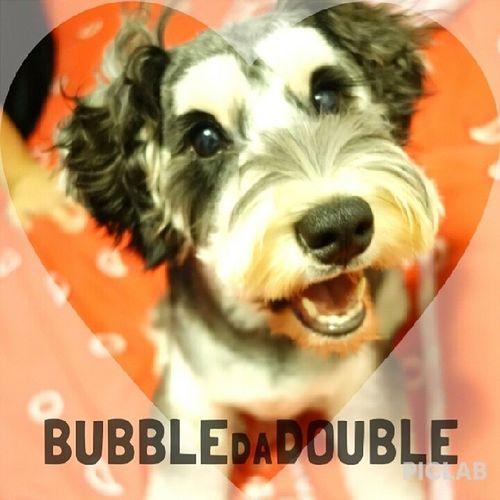 Bubblebb