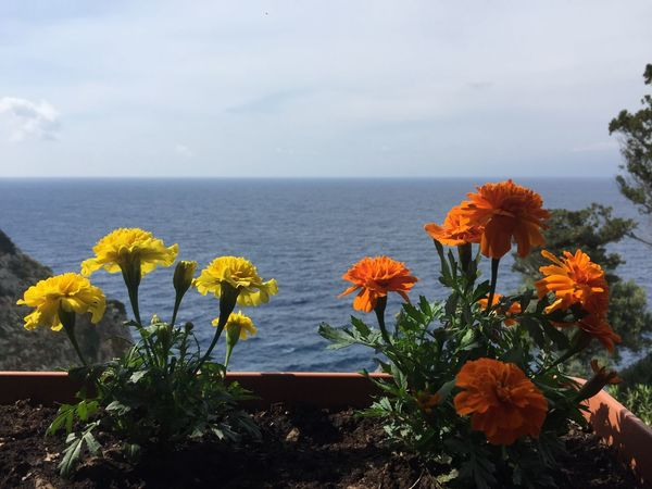Palaiokastritsa scenery. (1) Greece Photos CorfuIsland Flower Nature Beauty In Nature Sea Horizon Over Water Tranquility Scenics